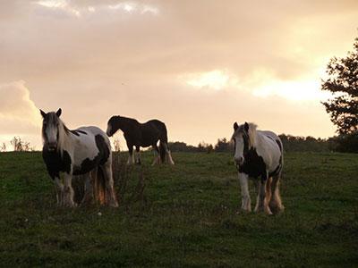 25/10/2018 : Découvrez l'équi-coaching !  à la ferme équestre du Bois d 'Ambre  (Ferrière les Bois)
